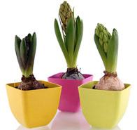 フラワーポット植物